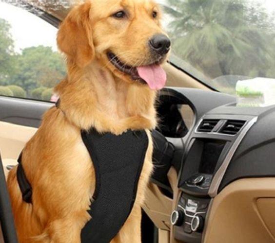 Dog Car Harness Australia