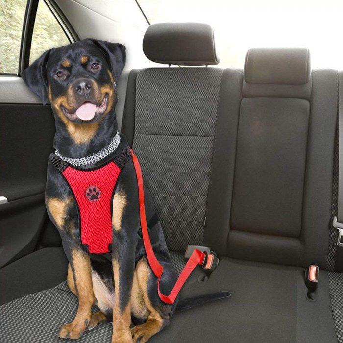 Dog-Harness-Black-7