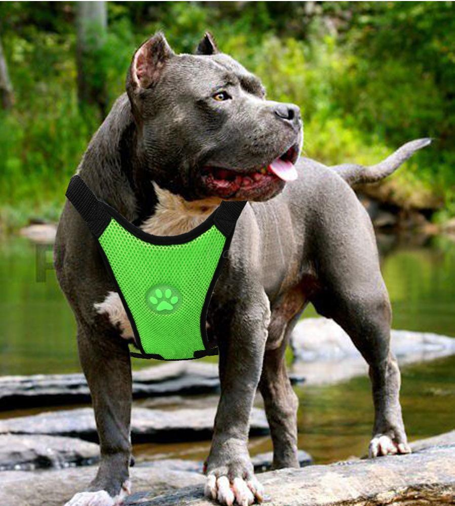 Dog-Seat-Belts-Australia-green