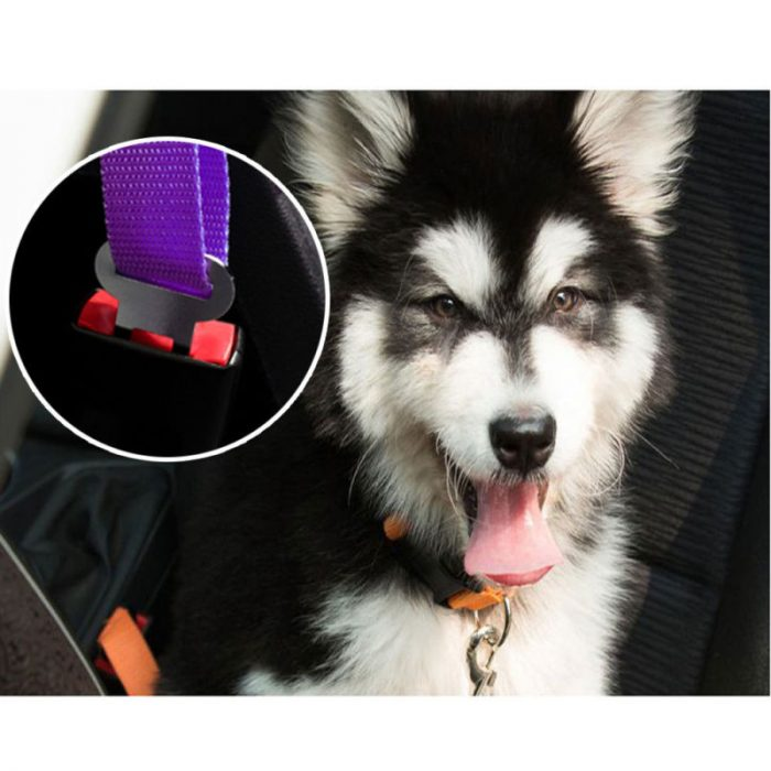 dog seat belts 7