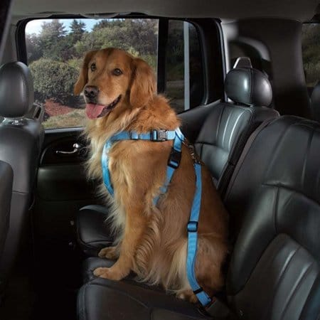 dog-seat-belt-harness-blue